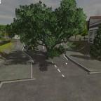 Baum in der Strasse