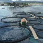 """Aquakultur """"Pescado fresco"""""""