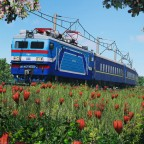 [TpF1] Trainspotting VL40U in the flowerfield