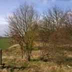 Buschwerk auf der ehemaligen Allertalbahn