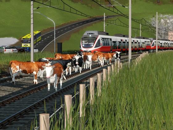 Kühe auf dem Gleis