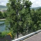 Haldenweiher Ansichten von der Rebbergstrasse her gesehen