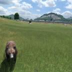Bär und Shinkansen