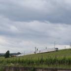 IC in den Weinbergen bei Hattenheim (Rheingau)