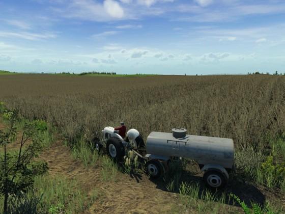 Das Getreidefeld nimmt langsam Form an