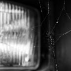 Spinnenparadis Strasshof