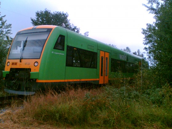 Mit der Waldbahn unterwegs